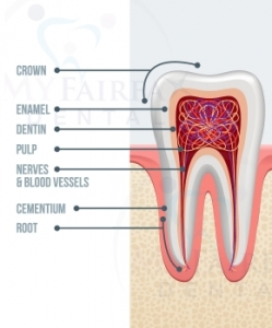 Root Canal Therapy in Fairfax Va by Dr. Le